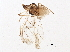 (Longicaudus - BIOUG09976-E04)  @11 [ ] CreativeCommons - Attribution Non-Commercial Share-Alike (2014) BIO Photography Group Biodiversity Institute of Ontario