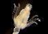 (Pennariidae - BIOUG01213-G03)  @11 [ ] CreativeCommons - Attribution Non-Commercial Share-Alike (2014) Peter Bryant University of California