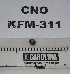 (Littorina planaxis - KFM-311)  @11 [ ] No Rights Reserved  Unspecified Unspecified