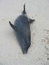 ( - CNP-MM-41)  @11 [ ] Copyright (2012) Enrique A Crespo Marine Mammal Lab- CENPAT-CONICET