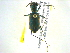 (Myriochile - BIOUG02565-F11)  @14 [ ] CreativeCommons - Attribution Non-Commercial Share-Alike (2013) BIO Photography Group Biodiversity Institute of Ontario