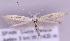 (Coleophora brunneosignata - MM20248)  @14 [ ] No Rights Reserved (2012) Marko Mutanen University of Oulu