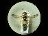 (Cerceris arenaria arenaria - CCDB-05716-D08)  @13 [ ] Copyright  G. Blagoev 2010 Unspecified