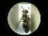 (Philanthus triangulum trinagulum - CCDB-05798-B12)  @13 [ ] Copyright  G. Blagoev 2010 Unspecified