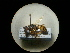 (Philanthus triangulum trinagulum - CCDB-05798-C07)  @13 [ ] Copyright  G. Blagoev 2010 Unspecified