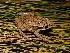 (Oxyrhopus - YC-138)  @11 [ ] Copyright (2011) CORBIDI Centro de Ornitologia y Biodiversidad