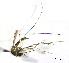 (Aedes euplocamus - CUL_0027)  @11 [ ] CreativeCommons - Attribution (2013) Rahuel Chan Instituto Tecnologico de Chetumal
