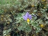 (Solanum xanthocarpum - WNP168)  @11 [ ] Copyright (2013) PHCDBS Paul Hebert Center for DNA Barcoding & Biodiversity Studies