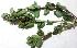 (Euphorbia peplis - MP2831)  @11 [ ] C (2014) PHCDBS Paul Hebert Centre For DNA Barcoding And Biodiversity Studies