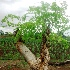(Moringa - MP2804)  @11 [ ] C (2014) PHCDBS Paul Hebert Centre For DNA Barcoding And Biodiversity Studies