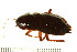  ( - Oriental cockroach)  @13 [ ] Unspecified (default): All Rights Reserved  Unspecified Unspecified