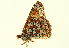  (Euphydryas chalcedona corralensis - BIOUG00719-E04)  @12 [ ] CreativeCommons - Attribution Non-Commercial Share-Alike (2011) BIO Photography Group Biodiversity Institute of Ontario