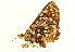  (Euphydryas editha augusta - BIOUG00719-G08)  @12 [ ] CreativeCommons - Attribution Non-Commercial Share-Alike (2011) BIO Photography Group Biodiversity Institute of Ontario