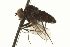  (Diaphorus - CNC DIPTERA 163196)  @11 [ ] CreativeCommons - Attribution Non-Commercial Share-Alike (2012) CNC/BIO Photography Group Biodiversity Institute of Ontario