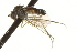  (Neoparentia - CNC DIPTERA 163201)  @11 [ ] CreativeCommons - Attribution Non-Commercial Share-Alike (2012) CNC/BIO Photography Group Biodiversity Institute of Ontario