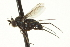  (Paraclius - CNC DIPTERA 163648)  @13 [ ] CreativeCommons - Attribution Non-Commercial Share-Alike (2012) CNC/BIO Photography Group Biodiversity Institute of Ontario