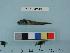 (Nectoliparis - PSRBC12-49)  @13 [ ] Copyright (2012) C. W. Mecklenburg Point Stephens Research