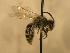 ( - JBWM0306520)  @13 [ ] Copyright (2008) Unspecified J.B. Wallis Museum of Entomology, University of Manitoba