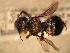 ( - JBWM0311664)  @13 [ ] Copyright (2008) Unspecified J.B. Wallis Museum of Entomology, University of Manitoba