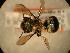 ( - JBWM0311778)  @13 [ ] Copyright (2008) Unspecified J.B. Wallis Museum of Entomology, University of Manitoba