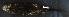 (Erethizontidae - ECO-SC-M 3350)  @13 [ ] CreativeCommons - Attribution Non-Commercial Share-Alike (2013) Consuelo Lorenzo M. El Colegio de la Frontera Sur