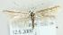 (Coleophora eupreta - MM21525)  @14 [ ] CreativeCommons - Attribution Non-Commercial (2012) Marko Mutanen University of Oulu