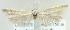 (Coleophora eupepla - MM21543)  @14 [ ] CreativeCommons - Attribution Non-Commercial (2012) Marko Mutanen University of Oulu