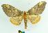 (Citheronia aroa - MHNC-ELH-BAR 0027)  @16 [ ] CreativeCommons - Attribution Non-Commercial (2012) Arturo Munos Saravia Museo de Historia Natural Alcide d'Orbigny