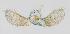 (Larentiinae - ID 15451)  @18 [ ] Copyright (2014) Gunnar Brehm Institut fuer Spezielle Zoologie und Evolutionsbiologie, Friedrich-Schiller Universität Jena
