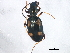 (Bembidion illigeri - ZFMK_COL_2010_531)  @13 [ ] CreativeCommons - Attribution Non-Commercial Share-Alike (2012) BIO Photography Group Biodiversity Institute of Ontario