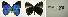 (Paraspiculatus - USNM ENT 00180793)  @14 [ ] Unspecified (default): All Rights Reserved  Unspecified Unspecified