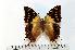 (Charaxes cowani - BC-Basq1722)  @14 [ ] Unspecified (default): All Rights Reserved  Unspecified Unspecified