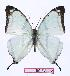 (Charaxes kahldeni - BC-EV0972)  @15 [ ] Unspecified (default): All Rights Reserved  Unspecified Unspecified