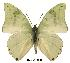 (Charaxes subornatus couilloudi - BC-EV0148)  @14 [ ] Unspecified (default): All Rights Reserved  Unspecified Unspecified
