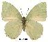 (Charaxes minor minor - BC-EV0155)  @14 [ ] Unspecified (default): All Rights Reserved  Unspecified Unspecified