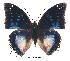 (Charaxes cithaeron kennethi - BC-EV0331)  @14 [ ] Unspecified (default): All Rights Reserved  Unspecified Unspecified