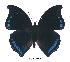 (Charaxes lycurgus lycurgus - BC-EV0376)  @14 [ ] Unspecified (default): All Rights Reserved  Unspecified Unspecified