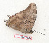 (Charaxes aubyni australis - BC-EV1314)  @13 [ ] Unspecified (default): All Rights Reserved  Unspecified Unspecified