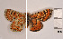  (Euphydryas desfontainii - RVcoll.130209KL32)  @13 [ ] Unspecified (default): All Rights Reserved  Unspecified Unspecified
