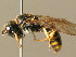  (Crossocerus vagabundus - BC ZSM HYM 04358)  @13 [ ] CreativeCommons - Attribution Non-Commercial Share-Alike (2010) Stefan Schmidt ZSM (Zoologische Staatssammlung Muenchen)