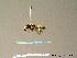 (Megachile deceptoria - BC ZSM HYM 06988)  @13 [ ] CreativeCommons - Attribution Non-Commercial Share-Alike (2010) Stefan Schmidt ZSM (Zoologische Staatssammlung Muenchen)