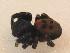 (Eresidae - ZSM_B_ARACH_575)  @13 [ ] CreativeCommons - Attribution Share-Alike (2012) Zoologische Staatssammlung Muenchen Zoologische Staatssammlung Muenchen