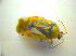 ( - BFB_Heteroptera_Kuechler_0120)  @11 [ ] CreativeCommons - Attribution Share-Alike (2010) Zoologische Staatssammlung Muenchen Zoologische Staatssammlung Muenchen