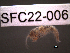 (Gammarus sp - SFC22-006)  @11 [ ] Unspecified (default): All Rights Reserved  Unspecified Unspecified