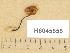 (Gymnopilus aff. picreus - H6045656)  @11 [ ] Copyright (2014) Diana Weckman Botanical Museum, Finnish Museum of Natural History, University of Helsinki