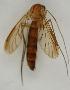 (Keroplatus - MZH_HP.1577)  @11 [ ] CreativeCommons - Attribution Non-Commercial No Derivatives (2013) Hanna Koivula Finnish Museum of Natural History