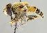 (Eristalis arbustorum - MZH_HP.47)  @14 [ ] CreativeCommons - Attribution Non-Commercial No Derivatives (2011) Finnish Museum of Natural History Finnish Museum of Natural History