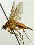 (Rhagionidae - MZH_HP.600)  @13 [ ] CreativeCommons - Attribution Non-Commercial (2012) Marko Mutanen University of Oulu