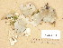 (Peltigera retifoveata - H9205144)  @11 [ ] Copyright (2013) Diana Weckman Botanical Museum, Finnish Museum of Natural History, University of Helsinki