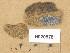 (Lecanoromycetes - H9205781)  @11 [ ] Copyright (2014) Diana Weckman Botanical Museum, Finnish Museum of Natural History, University of Helsinki